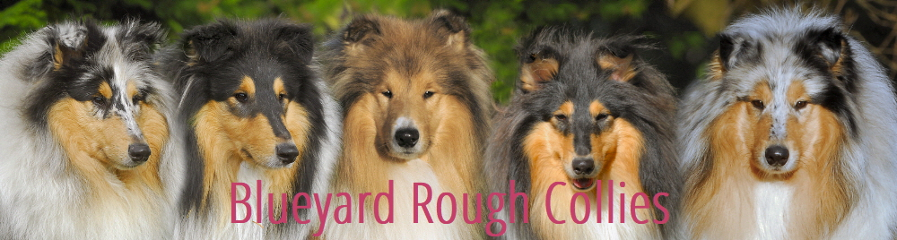 Blueyard Collies